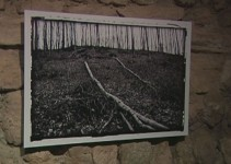 Na moji poti drevo Sandre Požun