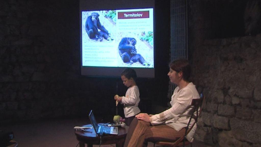 savanski simpanzi