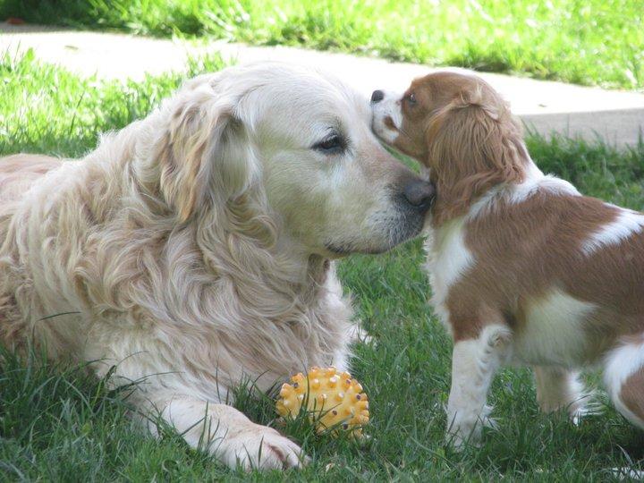 Sprememba pravilnika cepljenja psov proti steklini