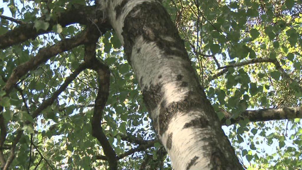 Kataster dreves v MO PTuj