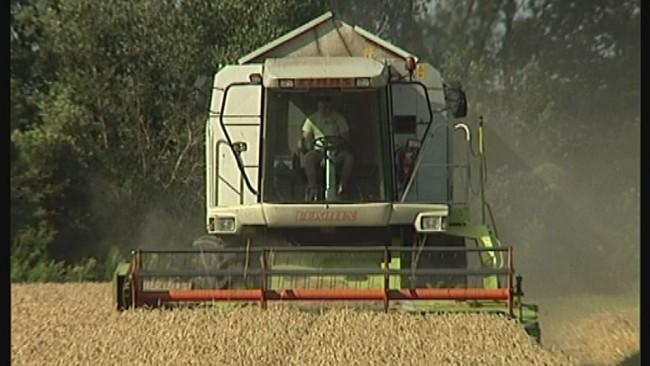 Zelo nizke cene pšenice
