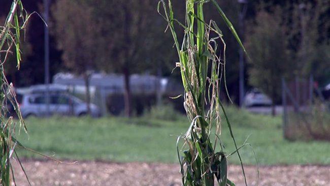 Na kmetijskih površinah več kot 11 milijonov evrov škode
