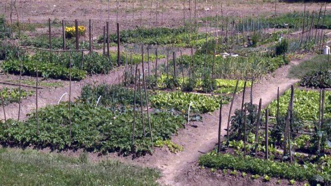 Urbani vrtovi po meri lokalne skupnosti