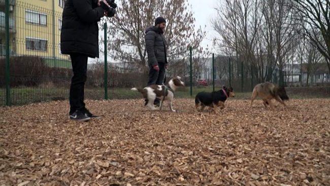 Na Ptuju odprli park za pse