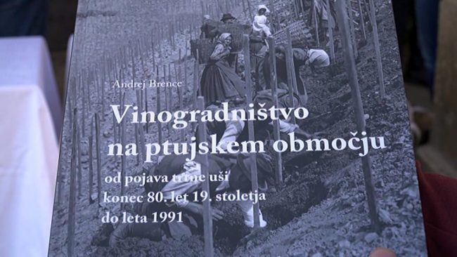 Vinogradništvo na ptujskem območju od pojava trtne uši konec 80. let 19. stoletja do leta 1991