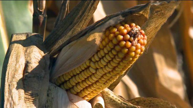Kmetijska letina