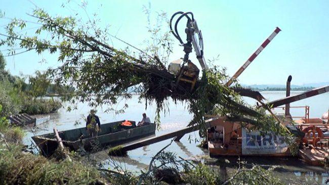 Čiščenje naplavin in dreves v reki Dravi