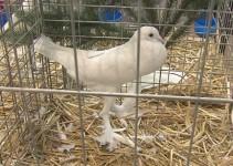 Tradicionalna razstava gojiteljev malih živali