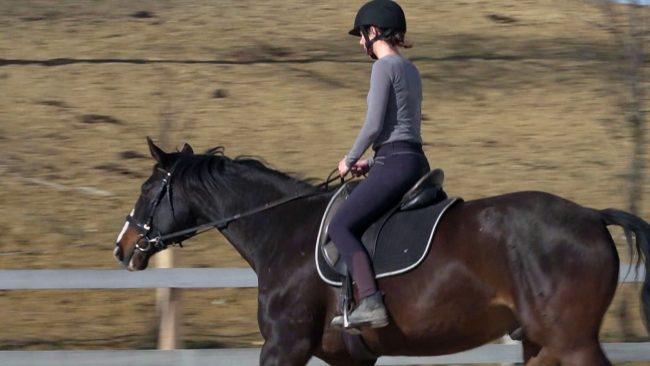 Konjeniško društvo Marsilea