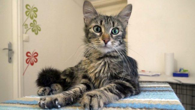 Sterilizacija in kastracija mačk in psov